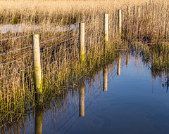 Reflections of a fence (Anthony White) Tags: reflection green nature water grass rural fence mirror natur nopeople bournemouth nosky hengistburyhead happyfencefriday
