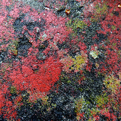 red palette, 2013 (doc(q)man) Tags: red abstract color texture yellow wall square bright random surface growth lichen docman rhythm palette almosttwodimensional