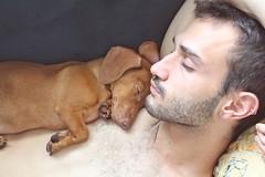 jos (Alison Hernandes) Tags: gay boy dog sleep dachshund basset teckel