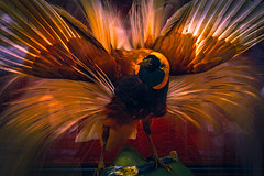 bird of paradise (Bobinstow2010) Tags: red bird glass stuffed paradise arty feather northumberland jar nationaltrust cragside