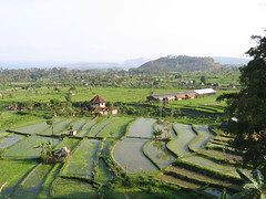 Bali rice fields (indemorep) Tags: bali water rice terrace terraced