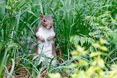 Look who popped up to say - Hi !! (norasphotos4u) Tags: animals flickr wildlife social canon7dmkii noraleonard canonef100400f4556iiusm