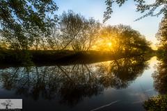 Willington, Bedfordshire (Rob Felton) Tags: bridge mist tree bedford outdoor bedfordshire flare serene brook felton refelection willington greatouse robertfelton bedfordrivervalleypark elstowbrook