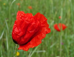Bijna/Almost (truus1949) Tags: wandelen natuur lente bloemen