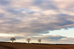 Wolds Triplet (matrobinsonphoto) Tags: uk trees light sunset england sky sun sunlight tree beautiful field rural landscape outdoors golden evening scenery natural space yorkshire farming north negative hour agriculture huggate