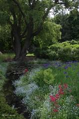 Vue sur le jardin botanique de Montral... / A view of Montreal's botanical garden... (Pentax_clic) Tags: robert juin pentax montreal jardin warren kr botanique 2013 imgp4213
