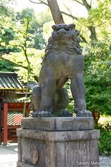 Komainu (takashi_matsumura) Tags: komainu lion dog nezu shrine bunkyoku tokyo japan sigma 1750mm f28 ex dc hsm nikon d5300