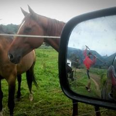 #cuadraelalisal #horses #caballos #riding #asturias #turismo #asturias #adventure