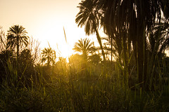 IMG_5340 (cpt_ahmed93) Tags: sunset nature aswan