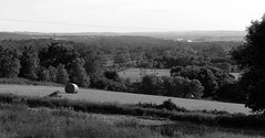 rotoballe in the evening (5) (Ange 29) Tags: trees bw canada holland king olympus valley fields marsh hay bales township omd em1 zd 35100mm