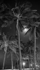 _JAM6658 (Jamil D750) Tags: miami night nighttime palm trees beach south full moon ocean drive nikon