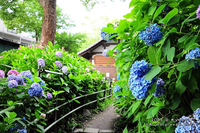 2013藤森神社10.jpg