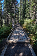 Larch Valley Trail, Banff (willchang87) Tags: sony alberta valley banff larch samyang a6000 samyang12mm