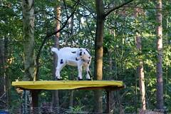 Mittagspause - Wenn es der Ziege zu bunt wird..... (Sockenhummel) Tags: berlin restaurant fuji goat ziege finepix fujifilm tisch wald x30 donbosco trattoria kladow fujix30 trattoriadonboscow