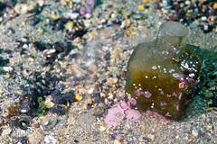 Glass Inkwell (ShaunMYeo) Tags: scubadiving inkwells gibraltar calpe underwaterphotography  gibilterra ikelite      gibraltr  cebelitark gjibraltar ibraltaro hibraltar xibraltar giobrltar gibraltrs gibraltaras ibilt
