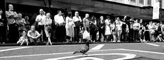 Parade (chrisroach) Tags: street blackandwhite bw monochrome manchester blackwhite pigeon streetphotography pride parade prideparade strut deansgate