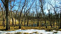 swampy (ènfin (verna R)) Tags: mygearandme mygearandmepremium me2youphotographylevel2 me2youphotographylevel3 me2youphotographylevel1 me2youphotographylevel4
