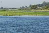 DSC01901 (Mario C Bucci) Tags: verde do eduardo garça tuiuiu dinan bigua banhado ratão anhambi tanquã tanquan