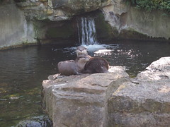 Playing Otters (jennygriffiths1) Tags: playing berlin zoo hugging otters
