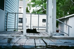 Neighbor's Cat (Zagros.os) Tags: old film cat 35mm vintage photography minolta bokeh superia magic 9 rangefinder full iso 400 frame fujifilm hi asa 45mm fujicolor f17 xtea