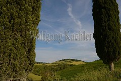 40074489 (wolfgangkaehler) Tags: italy landscape italian scenery europe european scenic tuscany pienza agriculture valdorcia agriculturallandscape tuscancypress agriculturalarea italiancypresstreescupressussempervirens