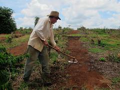 Caf-Coffee (Cida Garcia) Tags: people coffee caf brasil pessoas bebida mudas lavoura renovao lavradores produtividade cafezal agronegcios replantio homemdocampoprodutorruralcafeiculturaregionalnacionalgroscafeeirocafezallavouraproduoensacamentobrasilfazendasterreiroscafezaisfamaminasgerais