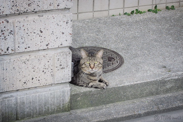 Today's Cat@2013-07-16