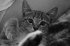 Wachiminga (nekotikva) Tags: underwear under gatos