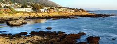 Pacific Coast Community II (Joe Josephs: 2,861,655 views - thank you) Tags: california nature ecology america landscapes unitedstates pacificocean californiacoast californiacentralcoast naturephotography pacificcoasthighway californiabeaches cambriacalifornia travelphotography landscapephotography outdoorphotography fiscaliniranch fiscaliniranchpreserve joejosephs nikon2485f3545g joejosephsphotography nikond800e copyrightjoejosephsphotography copyrightjoejosephs2013