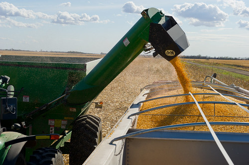 Corn Harvest by UnitedSoybeanBoard, on Flickr