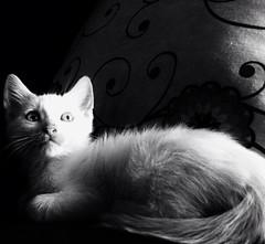 Felino sorpreso (marc_anto 1980) Tags: gatti originalfilter uploaded:by=flickrmobile flickriosapp:filter=original