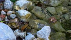 Springfrösche (Aah-Yeah) Tags: bayern frog rana frosch achental springfrosch chiemgau froschlurche froschlurch dalmatina