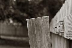 Come Undone (Elizabeth_211) Tags: wood monochrome fence 50mm bokeh tennessee nails jacksontn westtn assignment52382013 sherielizabeth