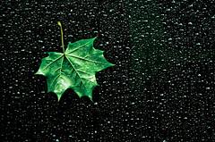 Green Leaf Stuck to the Raindrops Glass (Orbmiser) Tags: green fall glass rain oregon portland leaf nikon raindrops rainstorm waterdrops 28105mm d90 afd f3545 nikon28105mmf3545afd