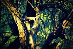 Deep in the forest (Guervs) Tags: trees espaa sunlight luz sol forest daylight andaluca rboles sierra bosque jan cazorla segura parquenatural lasvillas beasdesegura