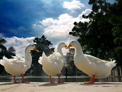 The triplet (AdithyaVR) Tags: ducks hyderabad chowmallahpalace