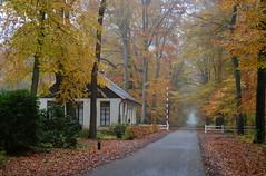 Mistige herfstochtend Gravenallee Almelo (2013) (l-vandervegt) Tags: autumn mist holland netherlands herfst nederland twente overijssel niederlande almelo gravenallee 2013