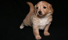 IMG_2270 (Pedro Montesinos Nieto) Tags: perro cachorros fragile mascotas donquijote laedaddelainocencia frágiles