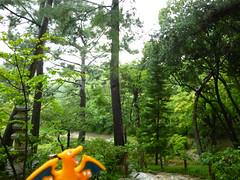 Charizard in Hiroshima, Hiroshima 22 (Shukkei-en Garden) (Kasadera) Tags: toys hiroshima figure pokemon pokmon  charizard   glurak  shukkeiengarden pokemonkids   dracaufeu