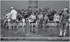 Gente y sus Perros (People and their Dogs) (Samy Collazo) Tags: street blackandwhite dogs kodak puertorico trix streetphotography sanjuan kodaktrix perros yashica blanconegro kodakfilm trix400 streetphotographer fotocallejera fotografiaurbana streetcapture kodakd76 streephotography blackwhitephotos fotografiacallejera fotografiadecalle fotourbana yashicaministerii yashinon45cmf28 lightroom3 samycollazo silverefexpro2