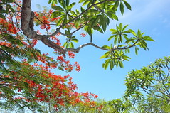 . (Out to Lunch) Tags: china flowers mountains tree beach fuji central vietnam da marble nang 223 x100 earthasia