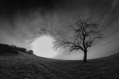another wasted sunrise (HJK Photography) Tags: winter blackandwhite bw sun white tree monochrome silhouette backlight mono eclipse key branches low bleach wideangle fisheye backlit 8mm darkened silverefexpro vision:mountain=0788 vision:clouds=0547 vision:outdoor=0967 vision:sky=0808