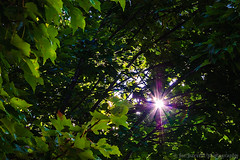 Beckoning (Joe Barrett Photography) Tags: light sun tree green leaves catchycolors beacon catchycolorsgreen flickrchallengegroup sigma1770mmf284dcmacrohsm
