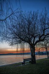 Lutry (Raphael Dufour) Tags: sun pose de switzerland soleil suisse lac leman arbre vaud lutry longue couche