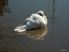 Frhjahrsputz  / spring-cleaning (2) (Ellenore56) Tags: light white inspiration color detail reflection bird water birds animal a