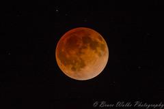 Blood Moon Eclipse (Arizphotodude) Tags: moonnightbloodmooneclipsegilbertarizonanikonsigma150500astronomyredstars