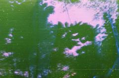 Sky in Pink (Lul De Panbehchi  Photographist) Tags: film analog fuji toycamera fujifilm damaged fuji200 decomposed rollo pelcula daado anlogo fotografaanloga photographist cmaradejuguete decompuesto