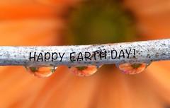Happy Earth Day (indiadawn) Tags: orange insect waterdrops waterdroplets flowerpetals macroflowers iphonemacro