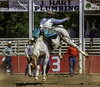 Bronco Riding (smbrooks_2000) Tags: california horse sports sonora cowboy action rodeo bronco equine motherloderoundup