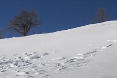 Val Bognanco-Passo di Monscera 25.01.15-34 (Maurizio Piazzai) Tags: switzerland neve cai montagna wallis gondo valbognanco